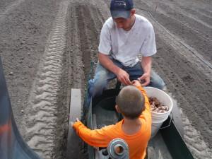 Planting potatoes one row at a time