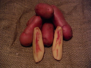 French Fingerling - Gourmet quality large fingerling tubers with smooth, dark rose, waxy skin and yellow flesh slashed with pink. Exceptional quality with nutty flavor, multi-purpose potato. Mid to late maturity. Moderate resistance to common scab.