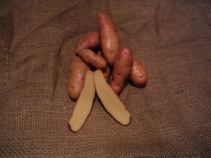 Rose Finn Apple Fingerling - An heirloom medium size long narrow tuber with pink blush skin and yellow inside. Excellent flavor. Mid to late maturity. Resistant to common scab.